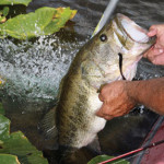 How Denny Brauer Fishes the Buzzbait for Bass in Cool Weather