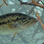 Keep your bass fishing simple with jimmy houston john in for Deep water bass fishing