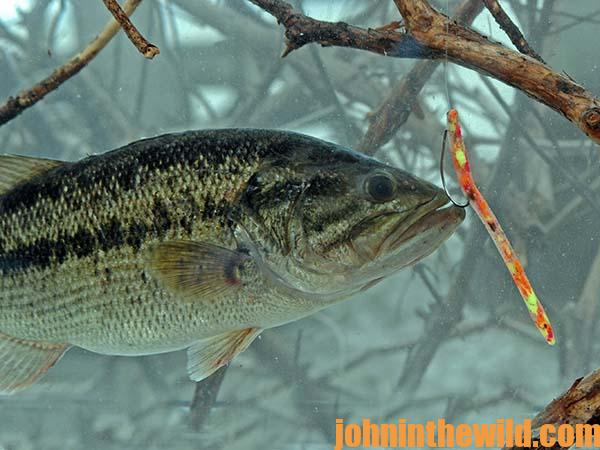 fishing for deep, clear-water bass with the split shot worm - john, Soft Baits