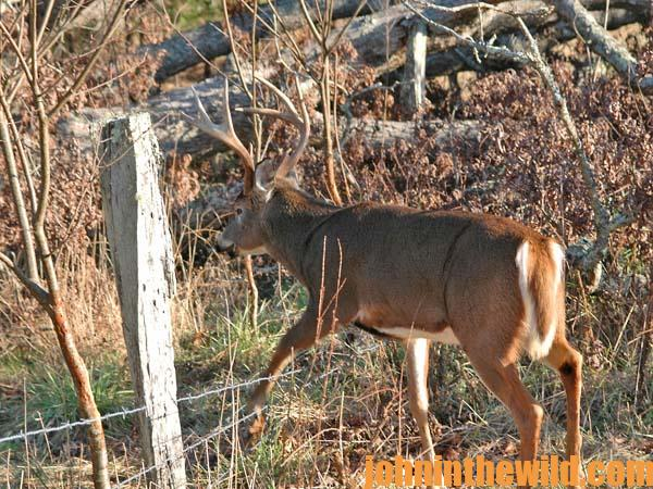 Gear Up to Make Deer Hunting Luck - 2
