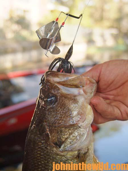 How Denny Brauer Fishes the Buzzbait for Bass in Cool Weather - 2