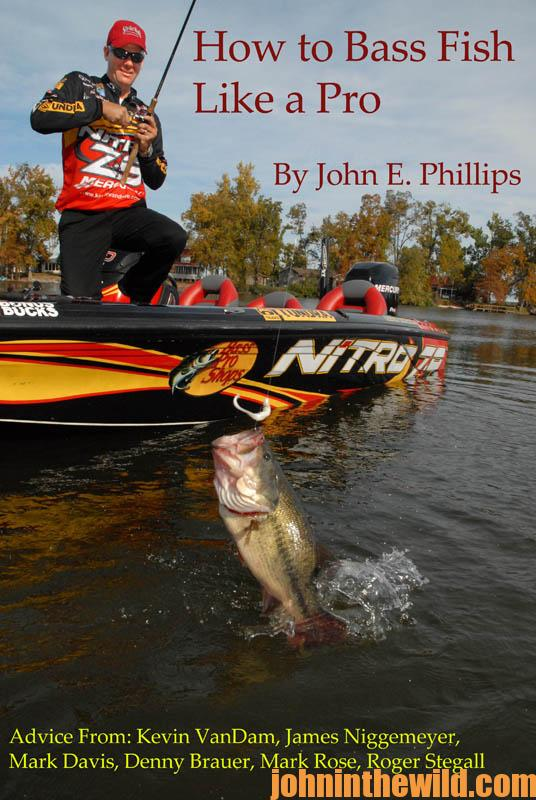 how-to-bass-fish-like-a-pro