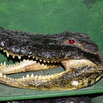 How to Determine an Alligator's Worth with Louisiana's Insta-Gator Ranch