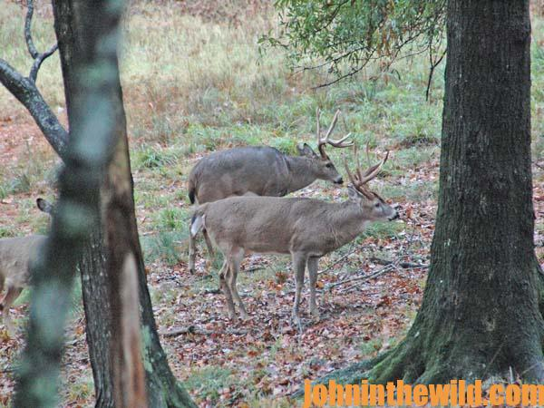 Hunt Buck Deer Near Noise with Dr. Robert Sheppard and Larry Norton - 3