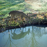 Hunt Near Parks and Camps to Find Deer Close to Home