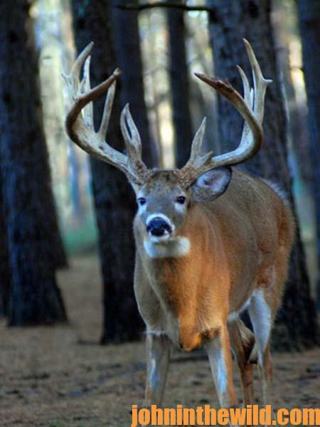 Learn from Ernie Calandrelli Correct Tree Stand Placement to Help You Take More Deer - 1