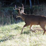 Learn from Ernie Calandrelli Correct Tree Stand Placement to Help You Take More Deer
