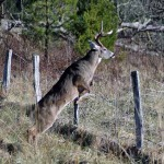 Locate Deer Sanctuaries and Get Permission to Deer Hunt from Landowners
