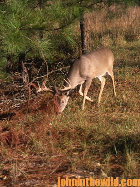 Locate Deer Sanctuaries and Get Permission to Deer Hunt from Landowners - 3