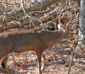 Longtime Deer Hunter Larry Norton Says to Follow the Squirrel and Keep a Tree Log to Find Bucks07