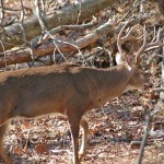 Longtime Deer Hunter Larry Norton Says to Follow the Squirrel and Keep a Tree Log to Find Bucks