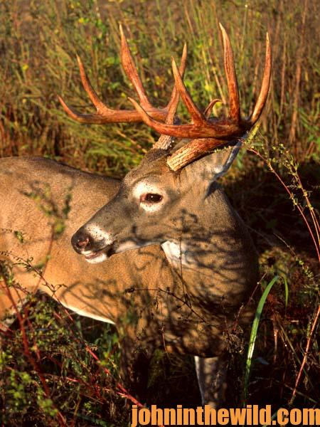 Michael Ahlfeldt On the Importance of Good Habitat and Sanctuary to Take a Trophy Bow Buck with a Bow - 2
