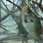 More Crappie Fishing Tips with John E. Phillips