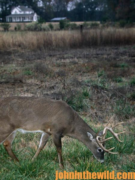 Research Big Buck Deer Places Near You to Hunt - 1