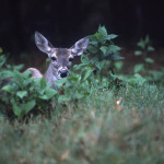 Research Big Buck Deer Places Near You to Hunt