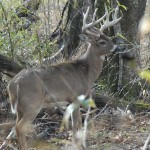 Shrink the Woods Where You Hunt Deer and Identify Funnel Areas