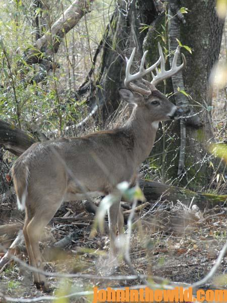 Shrink the Woods Where You Hunt Deer and Identify Funnel Areas - 2