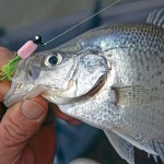 Whitey Outlaw on Fishing Stumps, Trees and Brush Piles with a Jigging Pole for Crappie