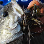Learn Successful Bass Fishing Tactics with Outdoor Writer John E. Phillips