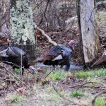 A Turkey Hunt with Quaker Boy Calls' Chris Kirby