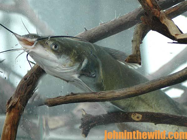 Catfishing the outside bends of river channels and the for What does cat fishing mean