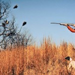 Three Key Ingredients to Look for when Purchasing a Bird Dog to Hunt Quail