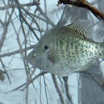 "How to Find and Catch Crappie in Extreme Weather Conditions by John E. Phillips with Gifford ""Sonny"" Sipes"