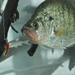 "Equipment and Tactics for Fishing Your Crappie Hot Spots by John E. Phillips with Gifford ""Sonny"" Sipes"