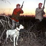 Consider Buying an Older Bird Dog to Hunt Quail