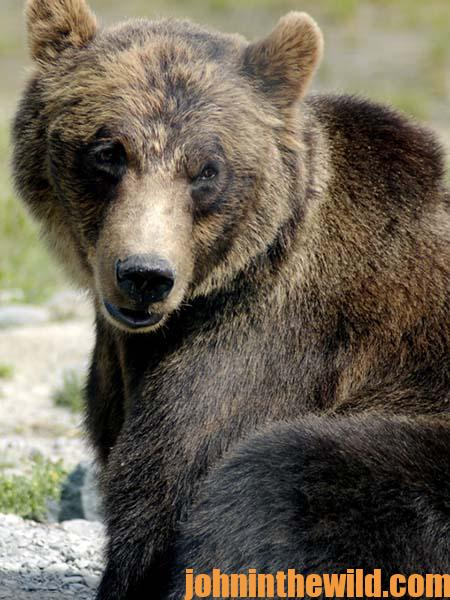 Taking Brown Bears with Frank Noska 17