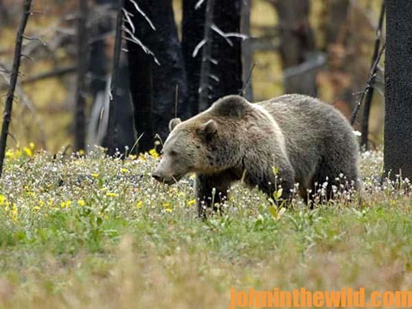 Taking Brown Bears with Frank Noska 19