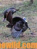 The Cow Pasture Turkey 715-Day 1-04