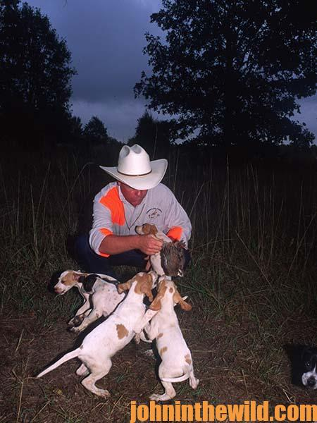 Three Key Ingredients to Look for when Purchasing a Bird Dog to Hunt Quail 10