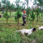 Know the Kind of Bird Dog You Need Before You Purchase One to Hunt Quail