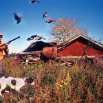 Where to Look For a Bird Dog Puppy to Hunt Quail