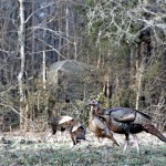 Avid Turkey Hunter and Champion Turkey Caller Walter Parrott Explains How He Uses Blinds and Decoys to Take Turkeys