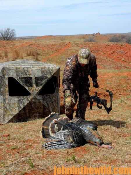 Walter Parrott on the Advantages of Hunting Turkeys from Blinds and Why to Take Turkeys in Fields with Your Bow 4