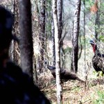 How to Close the Deal When Hunting Gobblers with John E. Phillips