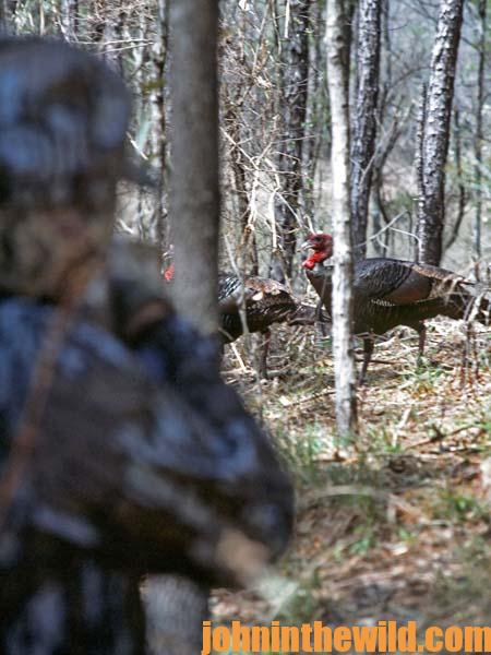 How to Set-Up on Gobblers across Water or Gobblers Strutting in the Field 14