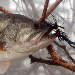 Legendary Angler Denny Brauer's Top Five Choices for Best Bass Baits
