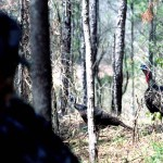 Fine Tuning Hunting Turkeys Without Calling with David Hale