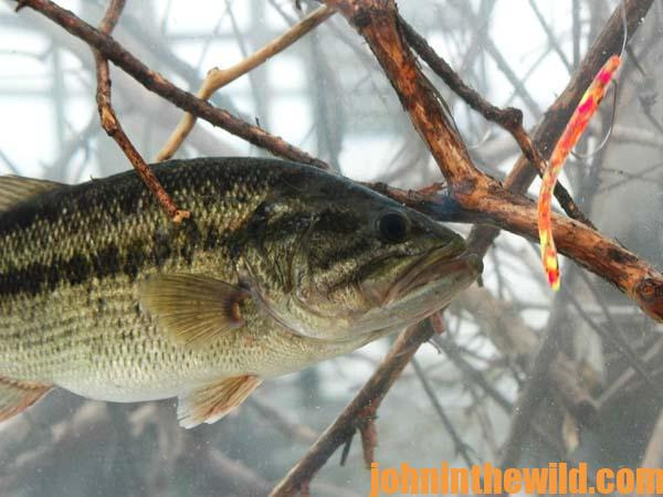 Professional Bass Fisherman Ken Cook on When to Fish a Worm, When to Fish a Lizard and When to Set the Hook on Bass 2