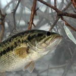 Using the Carolina-Rigged Plastic Worm or Lizard for Catching Bass