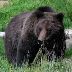 Cole Kramer Recommends Using a .375 for Kodiak Island Brown Bears