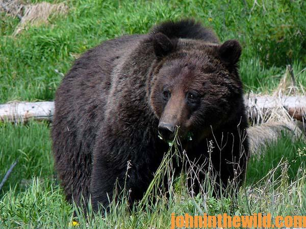 Cole Kramer Says to Back Down the Power of Your Riflescope to Take Brown Bears 3
