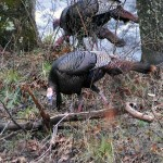 Taking the Pine Plantation PhD Gobbler with Eddie Salter
