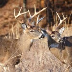 Using the Map as a Reminder to Hunt Deer Successfully