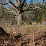 How Hunters Help Control Maryland's Nuisance Deer