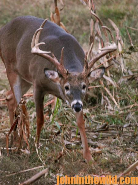 David Hale Uses Trail Cameras to Identify Nocturnal Buck Deer15