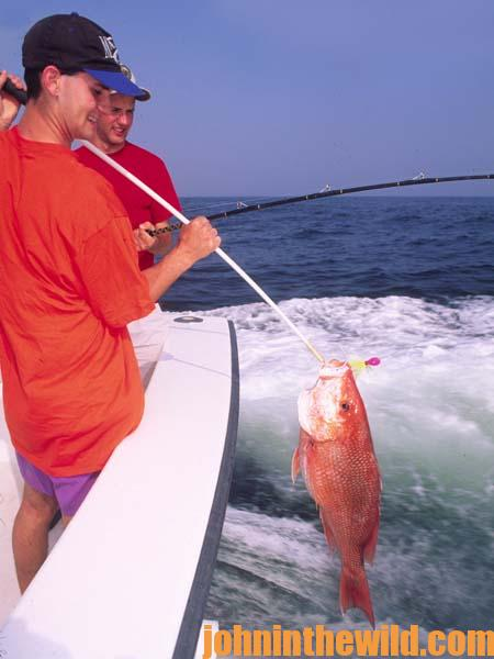Don't Pump the Rod or Try to Lift the Fish into the Boat when Saltwater Fishing 2